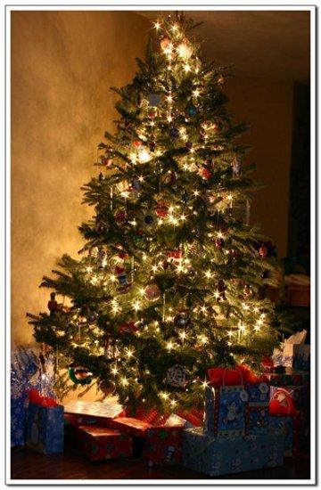 Pema e Krishtlindjeve, një simbol i krishterë apo një idhull pagan?