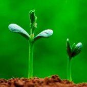Çfarë mbjell do të korrësh!